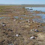 Montana hailstorm slaughters 11,000 birds