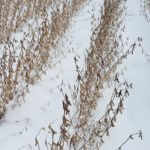 Early snowstorm presents huge challenges for ND farming community